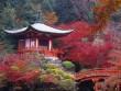 Tới Nhật thăm ngôi chùa này vào mùa nào cũng đẹp xuất sắc