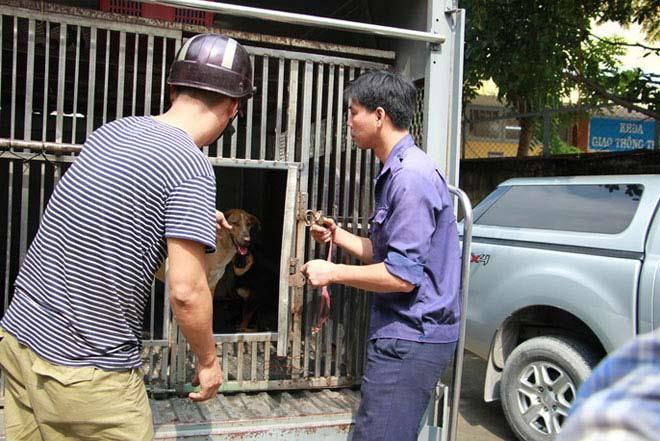 """Biệt đội """"săn"""" chó thả rông ở Sài thành - 11"""