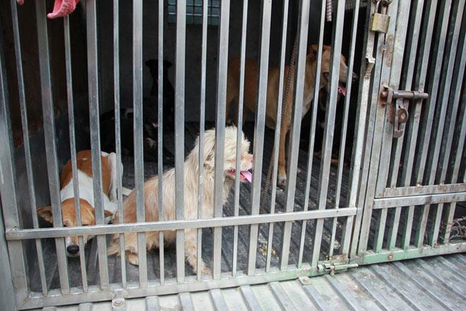 """Biệt đội """"săn"""" chó thả rông ở Sài thành - 10"""
