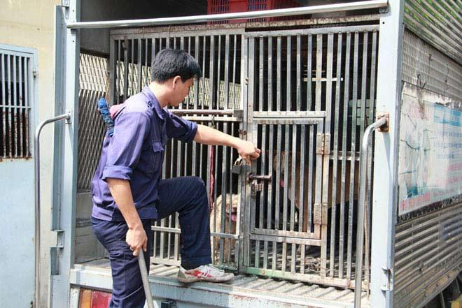 """Biệt đội """"săn"""" chó thả rông ở Sài thành - 13"""
