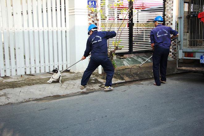 """Biệt đội """"săn"""" chó thả rông ở Sài thành - 3"""