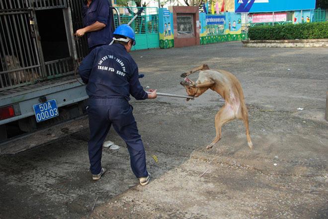 """Biệt đội """"săn"""" chó thả rông ở Sài thành - 6"""