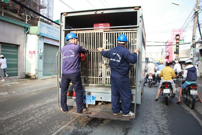 """Biệt đội """"săn"""" chó thả rông ở Sài thành - 1"""