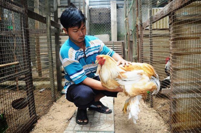 Người Sài Gòn săn 'gà kỳ lân' 5 ngón để ăn Tết - 13