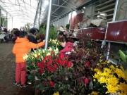 Thị trường - Tiêu dùng - Bất ngờ: Hoa hồng thờ Tết đắt gấp 10 lần mà vẫn cháy hàng
