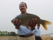 Đặc sản 29 Tết: Săn cá chép giòn  khủng  tiền triệu/con để ăn Tết