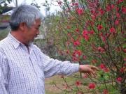 Thảnh thơi chăm đào Tết, lão nông xứ Lạng thu hơn trăm triệu/vụ