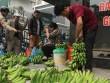 """30 Tết, người Hà Nội rủ nhau """"giải cứu"""" 5 tấn chuối Đắk Lắk"""