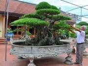 Mùng 1 Tết: Ngắm vườn  siêu  cây cảnh giá 10 tỷ đồng ở Hà Thành