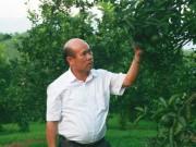 Mùng 1 Tết xông đất  Vua cam  Hàm Yên muốn đưa cam Việt ra thế giới