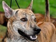 Thế giới - Thử xem bạn có biết 9 giống chó nổi tiếng này