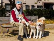 Thế giới - Giống chó đặc biệt thông minh, quốc khuyển của Nhật Bản