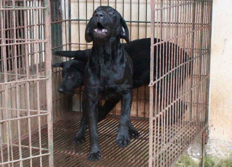 Điểm mặt 5 giống chó được cảnh sát Việt Nam tuyển làm trợ thủ - 3