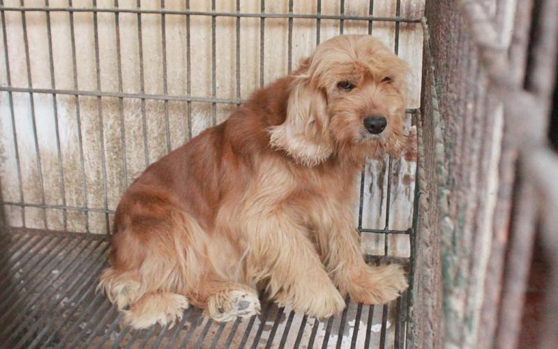 Điểm mặt 5 giống chó được cảnh sát Việt Nam tuyển làm trợ thủ - 4