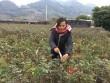"""Đầu năm, đến xông vườn của """"Nữ triệu phú"""" hoa hồng 8X ở Sơn La"""