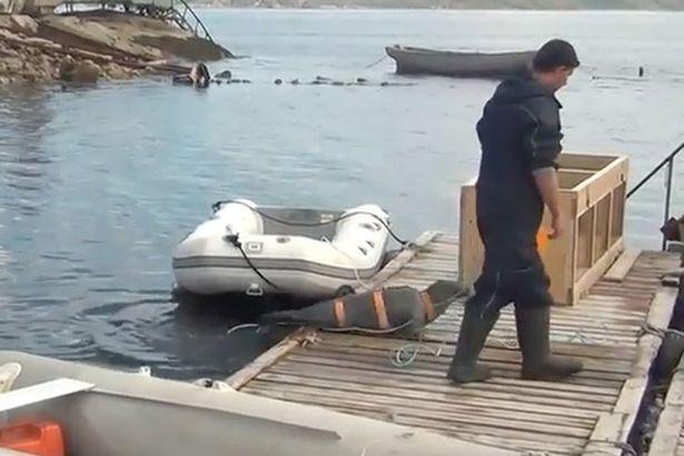 Vũ khí sống cực nguy hiểm của Hải quân Nga - 2