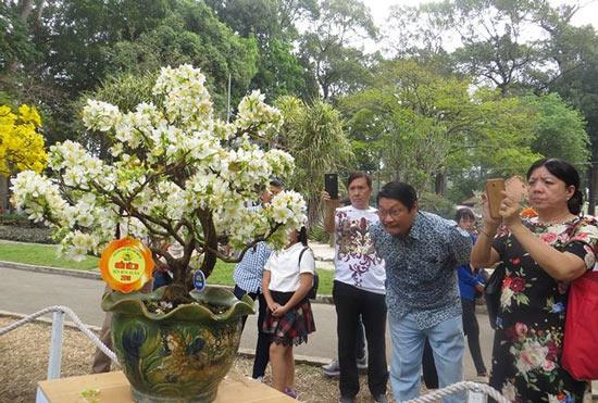 Mùng 3 tết, rủ nhau đi nhắm nhía 'kỳ hoa dị thảo' ở Sài Gòn - 1
