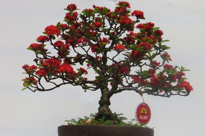 Mùng 3 tết, rủ nhau đi nhắm nhía 'kỳ hoa dị thảo' ở Sài Gòn - 16