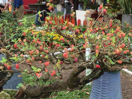 Mùng 3 tết, rủ nhau đi nhắm nhía 'kỳ hoa dị thảo' ở Sài Gòn - 7