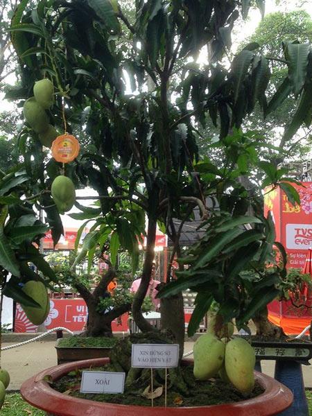 Mùng 3 tết, rủ nhau đi nhắm nhía 'kỳ hoa dị thảo' ở Sài Gòn - 8