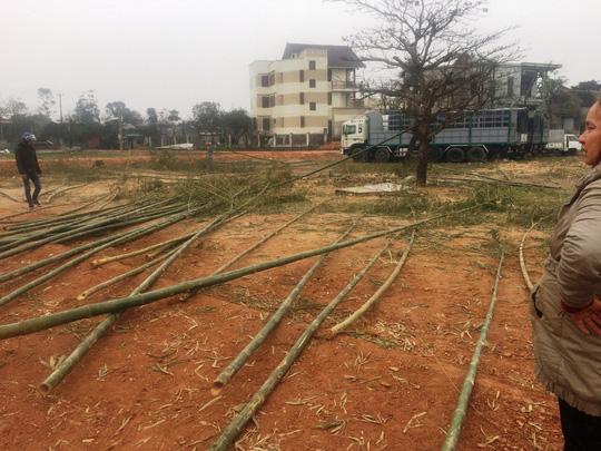 Độc đáo chợ bán cây nêu ngày Tết - 7