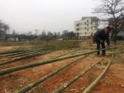 Độc đáo chợ bán cây nêu ngày Tết