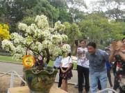 Mùng 3 tết, rủ nhau đi ngắm  ' kỳ hoa dị thảo '  ở Sài Gòn