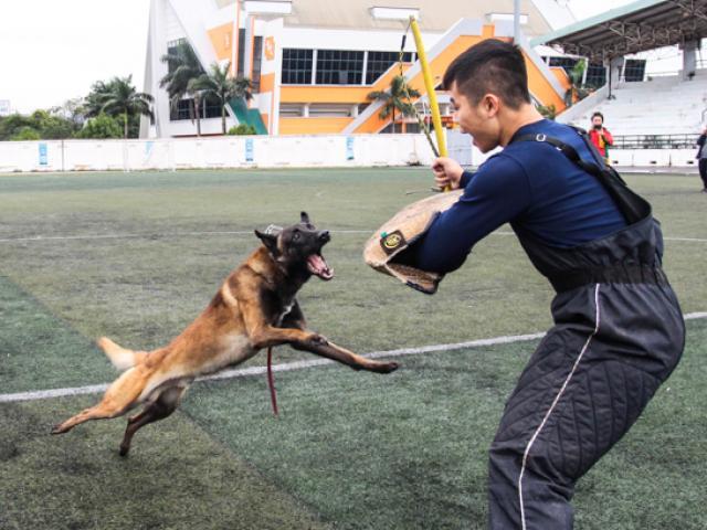 Chú chó tên Sơn Tùng nổi tiếng ở Trường Sa - 11