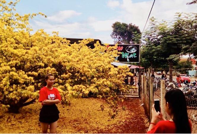 Hàng ngàn lượt người chiêm ngưỡng cây mai 'khủng' ở Đồng Nai - 4