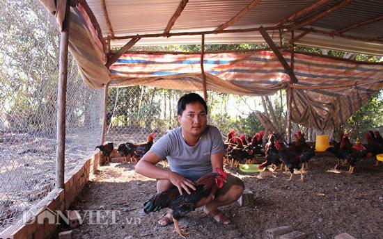 Nuôi gà thả vườn, chàng trai Lâm Đồng lãi 40 triệu đồng mỗi tháng - 1