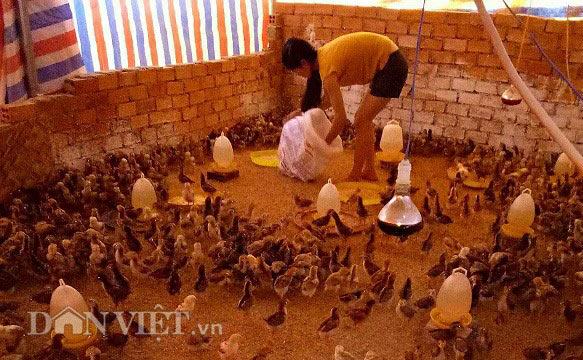 Nuôi gà thả vườn, chàng trai Lâm Đồng lãi 40 triệu đồng mỗi tháng - 2