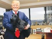 Tổng thống Donald Trump: Nguyên thủ tuổi Tuất dám nói, dám làm