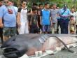 """Cá mập khổng lồ dạt bờ, dân Philippines sợ """"tận thế"""""""