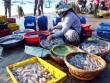 Ngư dân Bình Định trúng đậm ở chuyến ra khơi đầu năm