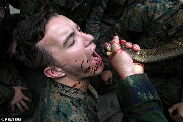 Xem lính Mỹ bắt rắn hổ mang, cắt đầu uống máu trong rừng Thái Lan - 1