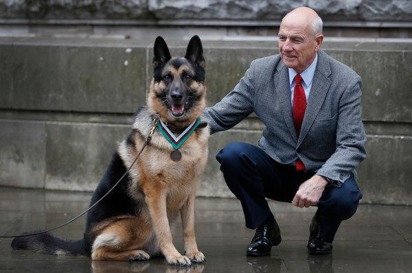 Những chú chó được huân chương vì thành tích vẻ vang - 2