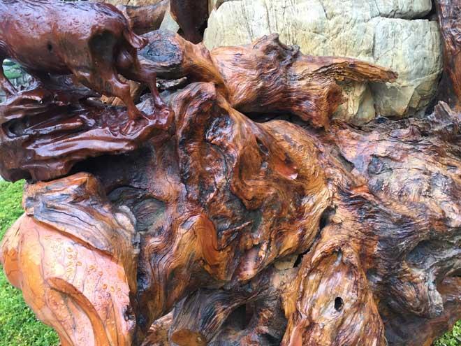 """Ngắm gốc gỗ trai đỏ thế """"Bạt phong hồi đầu"""" nghìn năm tuổi ở Hà Nội - 6"""