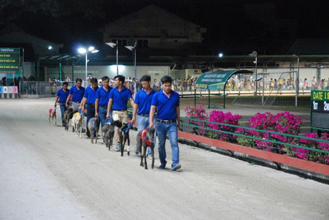 Đầu năm Mậu Tuất đi xem đua chó ở trường đua lớn nhất Đông Nam Á - 1