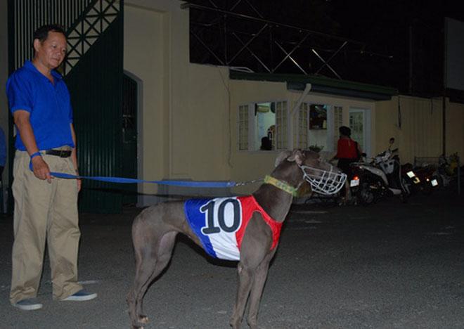 Đầu năm Mậu Tuất đi xem đua chó ở trường đua lớn nhất Đông Nam Á - 3