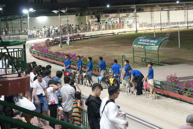 Đầu năm Mậu Tuất đi xem đua chó ở trường đua lớn nhất Đông Nam Á - 6