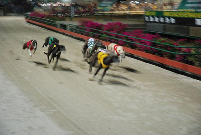 Đầu năm Mậu Tuất đi xem đua chó ở trường đua lớn nhất Đông Nam Á - 7