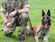 Những chú chó được huân chương vì thành tích vẻ vang