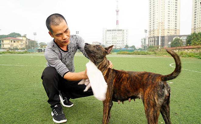 """Cận cảnh giống chó có """"lông mọc ngược"""" quý hiếm nhất Việt Nam - 3"""