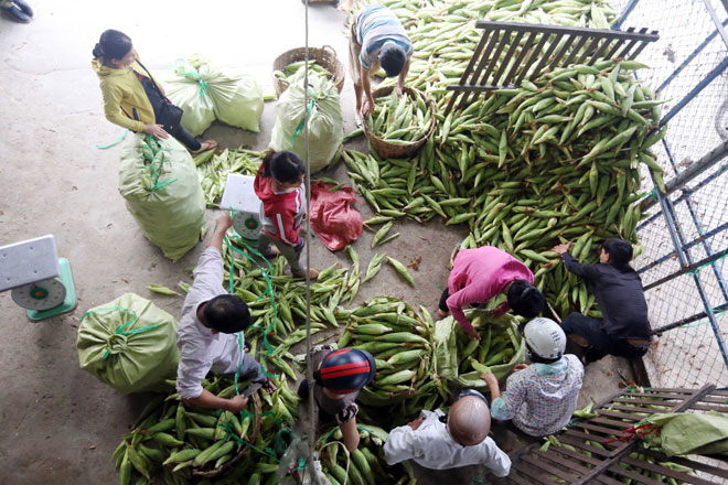 Chợ chỉ bán duy nhất một mặt hàng ở Sài Gòn - 1