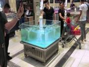 """Cá tự dưng  """" bay """"  khỏi bể nước vào xe mua hàng của khách"""