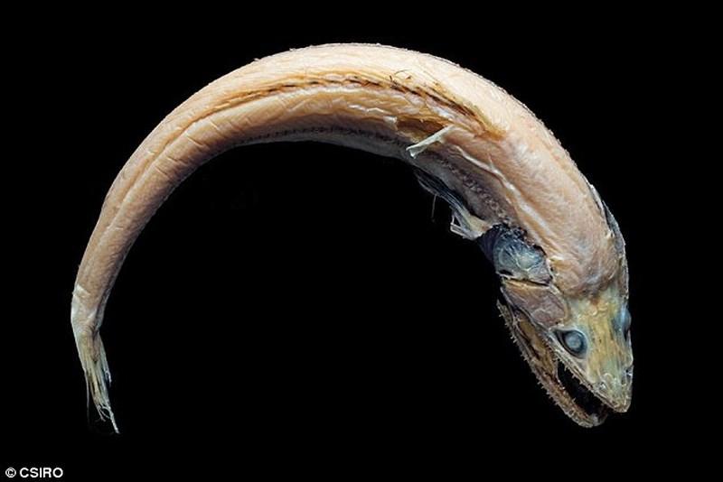 Phát hiện 5 loài sinh vật biển mới kỳ dị chưa từng thấy - 3