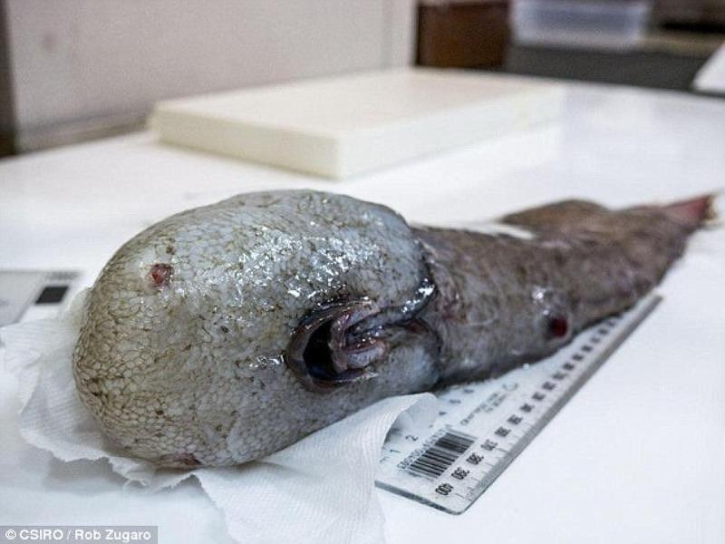 Phát hiện 5 loài sinh vật biển mới kỳ dị chưa từng thấy - 4
