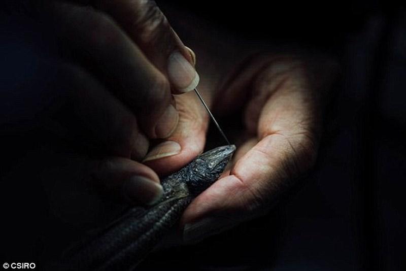 Phát hiện 5 loài sinh vật biển mới kỳ dị chưa từng thấy - 5