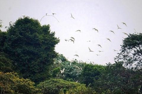 Từ chối tiền tỉ, lão nông hơn 30 năm bảo vệ đàn chim trời - 1
