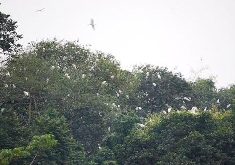 Từ chối tiền tỉ, lão nông hơn 30 năm bảo vệ đàn chim trời - 3